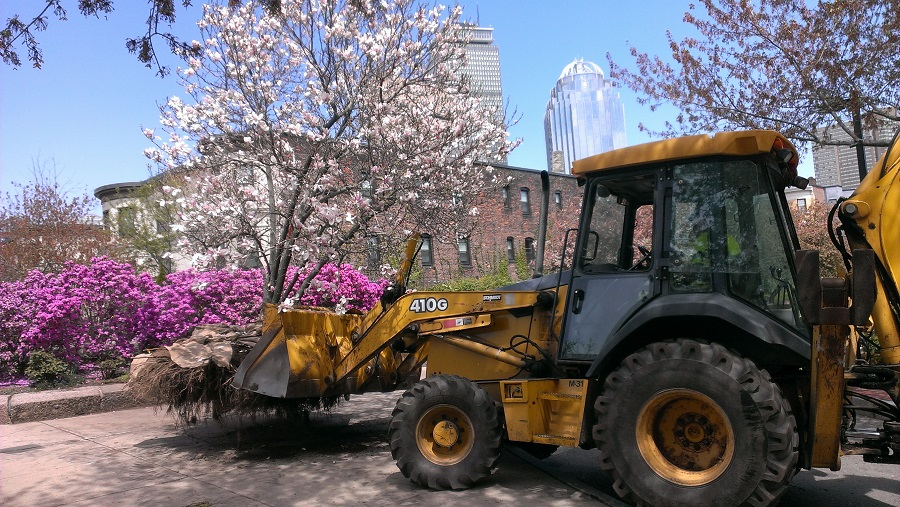 Photo - Magnolias on the move